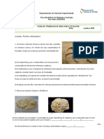 Ficha rochas sedimentares