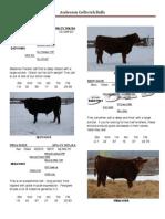 2011 Bull Sale Catalog(2)