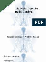 Anatomia Básica Vascular Arterial Cerebral