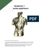 Anatomie-1-muscles-supérieurs_lores - Copie (2)