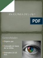 Anatomia del OJO 2