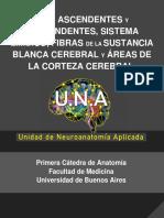 CIRCUITO - VÍAS ASCENDENTES Y DESCENDENTES, SITEMA LÍMBICO, FIBRAS BLANCAS Y ÁREAS CORTICALES