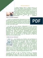 rinits alergica doc 2