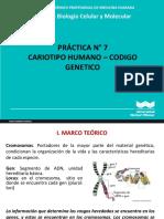PRACTICA_N7_-_CARIOTIPO_-_CODIGO_GENETICO (2)
