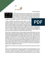 NEWSLETTER LICINIA DE CAMPOS no 7 -Diferenças entre carne vermelha e carne branca