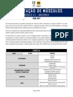 Organização de Músculos - João Cavaco