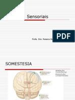Sistemas Sensoriais_2013