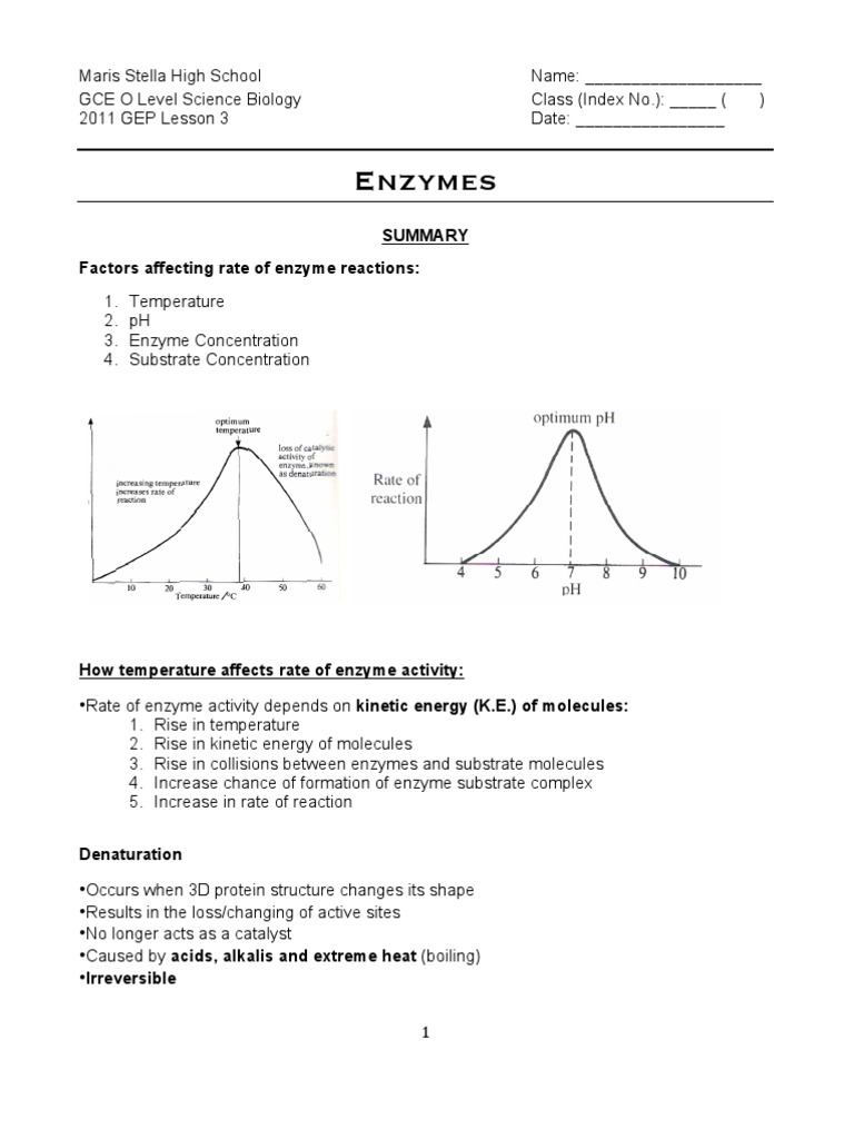 worksheet Enzyme Activity Worksheet gep worksheets enzymes catalase substrate chemistry