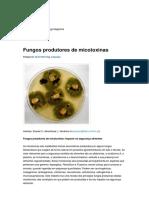 Fungos produtores de micotoxinas - Microbiologia