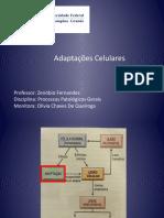 1. Adaptações Celulares-17.2