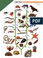 atlas de zoologia, santillana