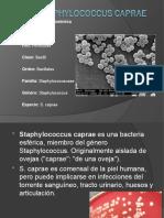Staphylococcus caprae