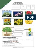 UH B. Ing plants