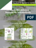 1.- Herencia Mendeliana y Segregación independiente