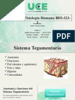 Sistema Tegumentario - Grupo 1