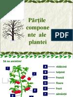 383656166 Partile Plantei Si Rolul Lor