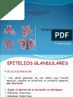Clase 4 Epitelial II