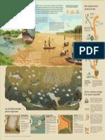 [Infografía] Migracion de Peces Amazonicos_WCS Peru_2020