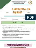 Cirugía Urogenital en Equinos