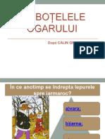 Ciubotelele Ogarului - ppt