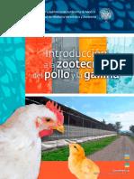 Intro Zoot Pollo Gallina