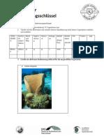 12.Kl_Dichotomer Bestimmungsschlüssel 2020-2021