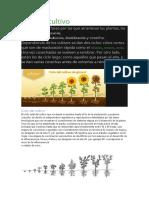 ciclo de cultivo