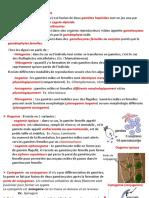 Resproduction sexuée des Algues (2)