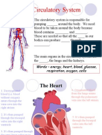 Organs in the Circulatory System Are