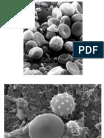 Celulaimagenes