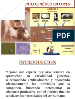 Mejoramiento_Genetico_En_Cuyes