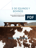 bovinos razas