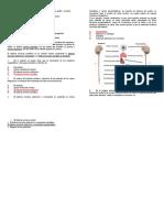 Actividad- Evaluacion tipo ICFES