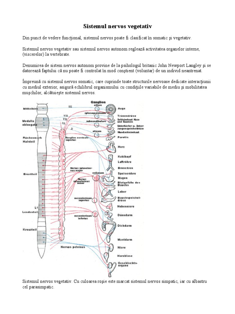 sistemul nervos în lanț