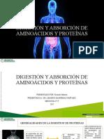 Digestion Aminoacidos Proteinas Finalizado