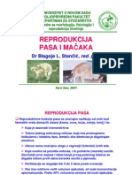 Reprodukcija Pasa i Macaka