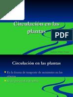 circulacindelasplanta (2)