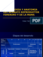 23 embriologia ginecologica