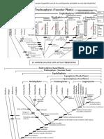 Cladograma de Las Plantas Terrestres