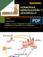 hormonas-reproduccion-y-desarrollo