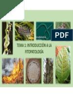 TEMA 1 (2). TIPOLOGÍAS DE DAÑOS DE INSECTOS
