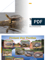 Protect Our Turtles