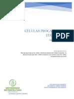 Cuadro Comparativo c.procariota y Eucariota
