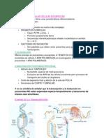 TRANSCRIPCION Diferencias Eucariotas-procariotas
