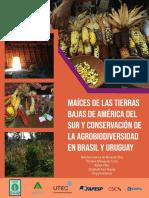 Raizes Das Terras Baixas Da America - Brasil e Uruguai