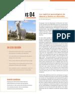 Boletin de Camelidos 4
