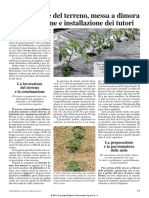 Coltivazione dei pomodori 2di2