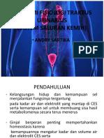 anatomifisiologisistemperkemihantraktusurinarius-190306073947