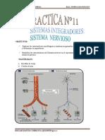 011 Sistema Nervioso