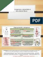 embriogeneza-placentatia-1